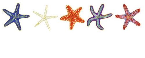 OHDIstarfish2